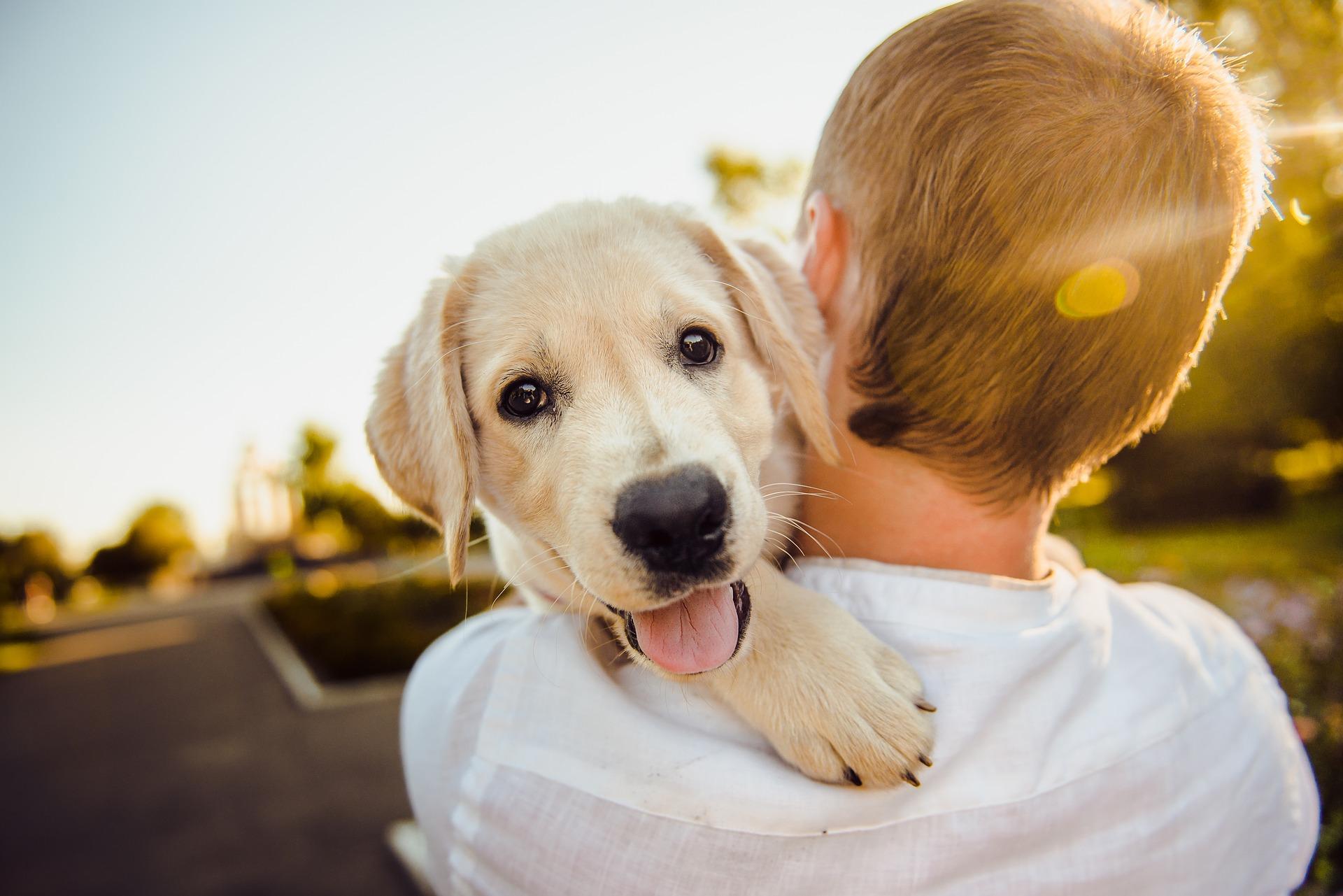 """""""Massage humain, massage canin !"""""""